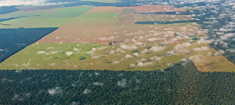 Large industrial soybean fields in midst of Cerradao forest. Photo of an agroindustrial field being prepared for soy bean planting.  The forest surrounding the field is an indigenous area in Brazil.