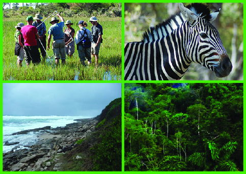 Ewel Postdoctoral Fellowship in Ecology and Environmental Science in the Tropics and Subtropics